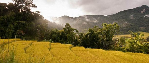 compos-de-arroz-en-chiang-mai