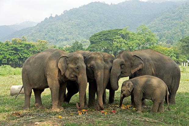 Foto de elefantes en Elephant's Nature Park